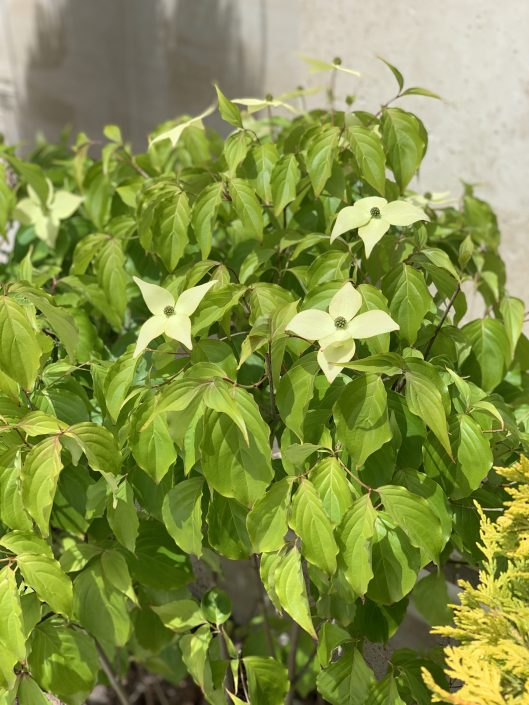 растения на участке (Одессе)