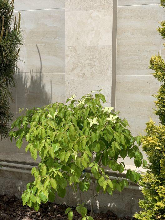 посадка растений на участке