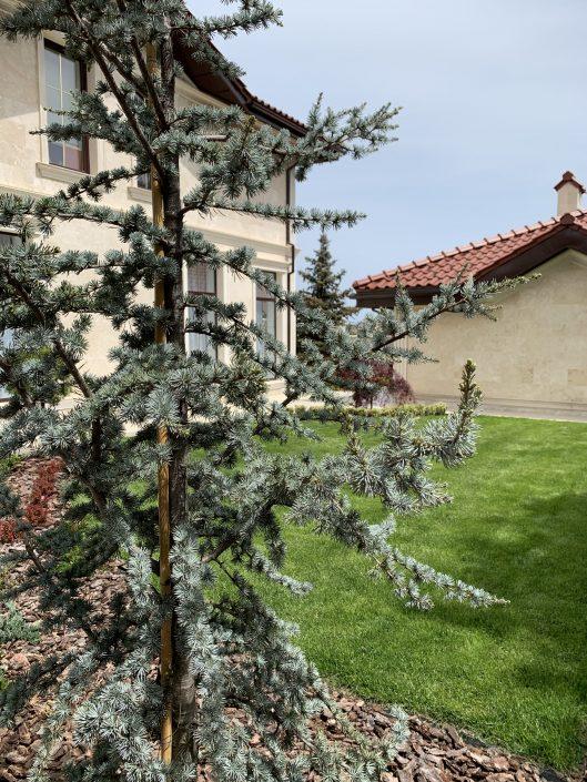 ландшафтное озеленение дома